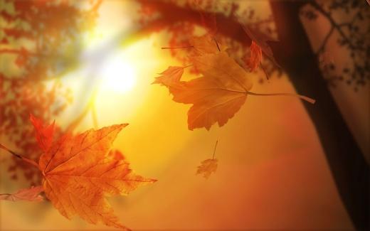foglie_autunno